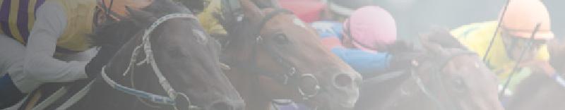競馬商材 感想評価本舗